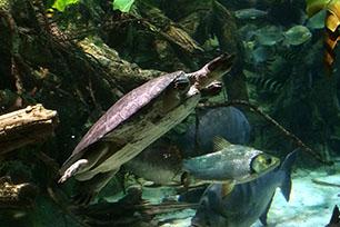 Aquarium reels in the love