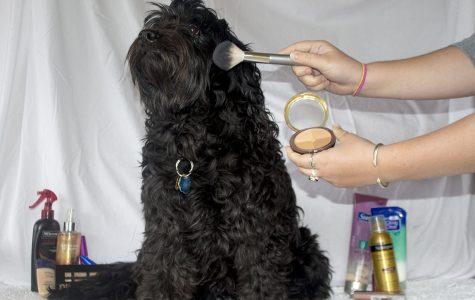 Patriot Debate: Animal Testing