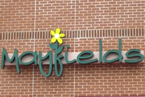 Mayfields exercises fresh spirit with personal gifts