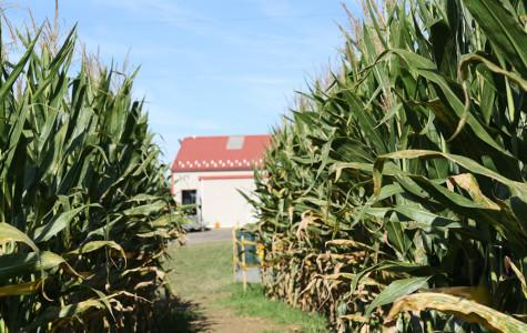 Quick Picks: Brad's showcases traditional fall corn maze and pumpkin picking