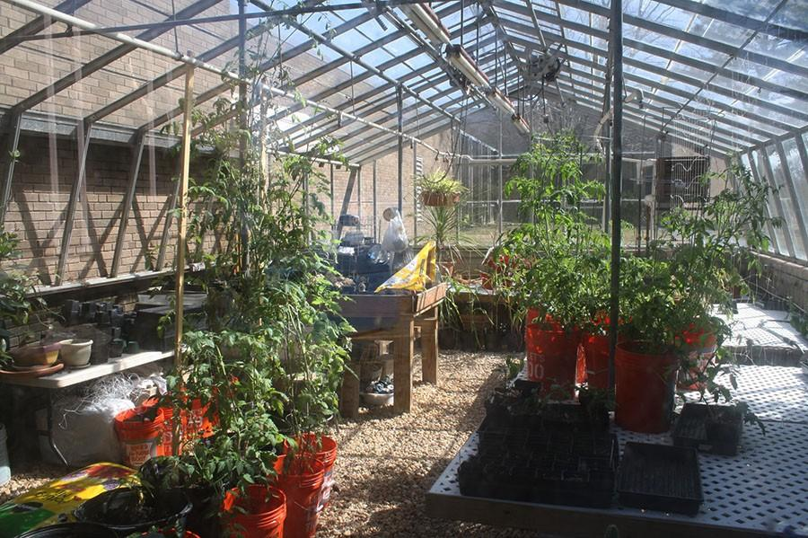 Senior Selena Ranney's senior project focuses on using the greenhouse to grow food for the cafeteria and starting a gardening club.