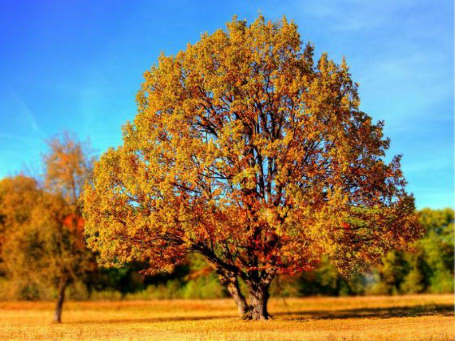 What fall activity should you try?