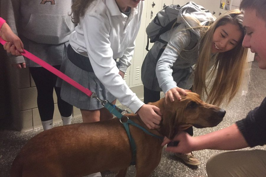 Junior Paige Alban, senior Yena Kim, and junior James Keller (left to right) pet a bloodhound after school on Friday. Sophomore Alyssa Ross brought in her dog for a presentation on the business project she created for Social Studies teacher Jake Hollin's financial literacy class.