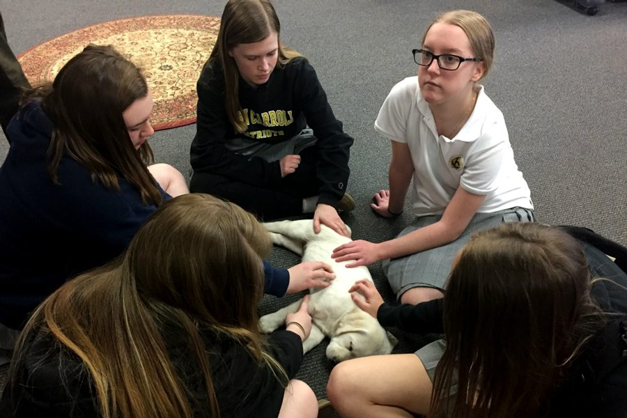 Sophomores Maureen Healy (center) and Elizabeth Schucker (right) pet a yellow lab puppy in the library after school on Thursday, March 9. Caroline Angert, class of '16, brought in her puppies to test animal therapy and help the community cope with the death of Josh Hamer, according to Director of Guidance Larry Hensley.