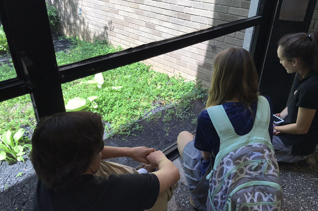 Senior Adria Pirozzi points out the baby ducks to junior Laura Amrhein after school on May 2. Each year, a mother duck returns to the courtyard to raise her chicks.