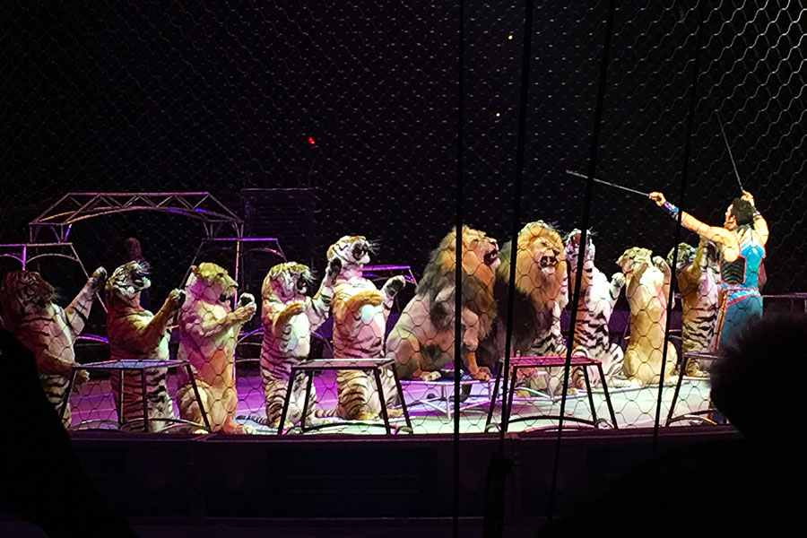 Big Cat Trainer Alexander Lacey arranges lions and tigers in line to give the crowd a big roar. The Ringling Bros. and Barnum & Bailey Circus last performance will be in 2017 after 146 years.
