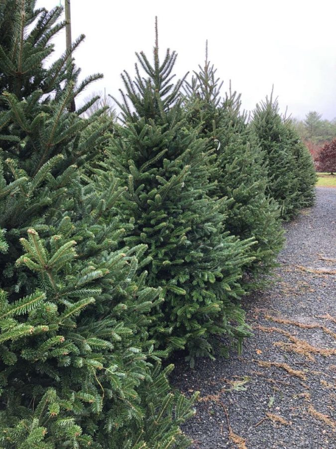 Alumni and current Patriots operate Christmas tree farm & plant nursery